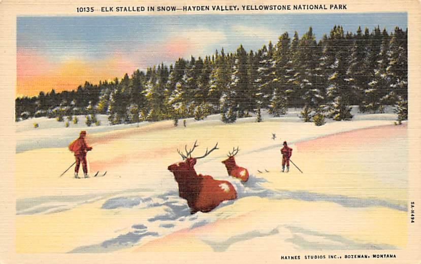 sub065309 - Yellowstone National Park Post Card