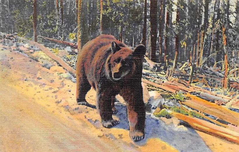 sub065351 - Yellowstone National Park Post Card