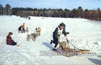 Sled Dog Racing In New Engl&, USA