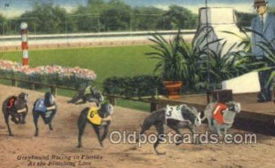 Greyhounds, FL USA