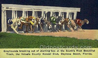 spo046102 - Volusia Kennel Club, Daytona Beach, FL USA Dog Racing, Old Vintage Antique Postcard Post Card