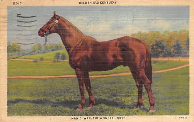 spof021700 - Kentucky, USA Man O War Horse Racing Postcard