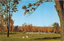 spo013645 - Old Vintage Golf Postcard Post Card