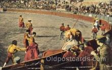 spo017018 - Bull Fighting Postcard