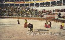 spo017019 - Bull Fighting Postcard