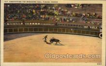 spo017265 - Tijuana, Mexico Bull Fighting, Bullfighting Postcard Postcards