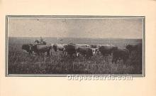 spo017322 - Old Vintage Bull Fighting Postcard Post Card