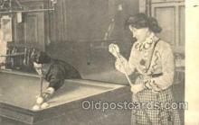 spo018056 - Billiards, Pool Postcard Postcards