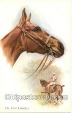 spo019007 - Polo Postcard Postcards
