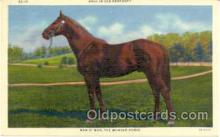 spo021005 - Man O' War, Horse Racing, Trotters,  Postcard Postcards