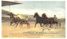 spo021042 - Trotters Racing Horse Racing Postcard Postcards