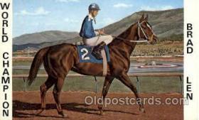 spo021085 - Brad Len Horse Racing Trotter, Postcard Postcards