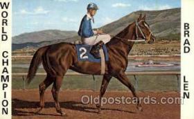 spo021092 - Brad Len Horse Racing Trotter, Postcard Postcards