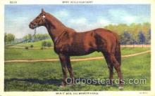 spo021418 - Man O'War the Wonder Horse, Horse Racing, Trotters, Postcard Postcards