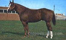spo021445 - Wallaby,  Worlds Champion Halter Stallion of 1967 and Grand Champion Stallion at 1969, Horse Racing, Trotters, Postcard Postcards