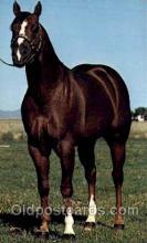 spo021475 - Beau Bonanza, Horse Racing, Trotters, Postcard Postcards