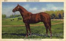 spo021478 - Man-0-War, The Wonder Horse, Horse Racing, Trotters, Postcard Postcards