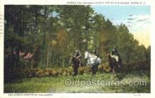 spo021488 - Hitchcock Woods Horse Racing, Trotter, Trotters, Postcard Postcards