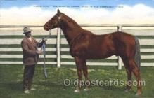 spo021509 - The Wonder Horse Horse Racing, Trotter, Trotters, Postcard Postcards