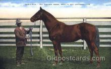 spo021514 - The Wonder Horse Horse Racing, Trotter, Trotters, Postcard Postcards