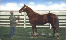spo021519 - The Wonder Horse Horse Racing, Trotter, Trotters, Postcard Postcards