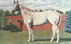 spo021525 - Prince Plaudit, Stallion 55-156 Horse Racing Postcard Postcards