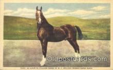 spo021528 - Nasik an imported  Stallion  Horse Racing Postcard Postcards