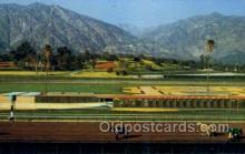 spo021577 - Horse Racing Old Vintage Antique Postcard Post Cards