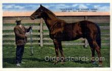 spo021603 - Man-O-War Bred in Old Kentucky Horse Racing Old Vintage Antique Postcard Post Cards