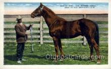 spo021605 - Man-O-War Bred in Old Kentucky Horse Racing Old Vintage Antique Postcard Post Cards