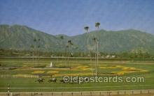spo021608 - Santa Anita Park Arcadia, CA USA Horse Racing Old Vintage Antique Postcard Post Cards