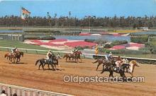 spo021651 - Horse Racing Postcard Post Card