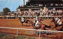 spo021652 - Horse Racing Postcard Post Card