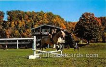 spo021662 - Horse Racing Postcard Post Card