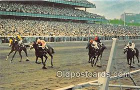 spo021663 - Horse Racing Postcard Post Card