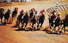 spo021667 - Horse Racing Postcard Post Card