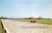 spo021669 - Horse Racing Postcard Post Card