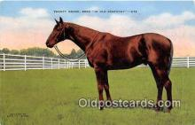 spo021675 - Horse Racing Postcard Post Card