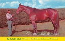 spo021678 - Horse Racing Postcard Post Card