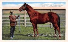 spo021681 - Horse Racing Postcard Post Card