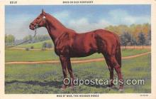 spo021682 - Horse Racing Postcard Post Card