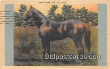 spo021685 - Horse Racing Postcard Post Card