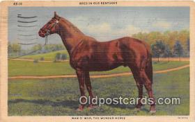 spo021700 - Horse Racing Postcard Post Card