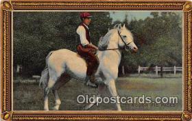 spo021705 - Horse Racing Postcard Post Card