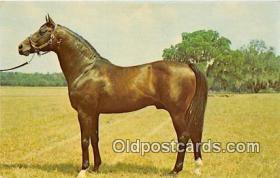 spo021736 - Horse Racing Postcard Post Card