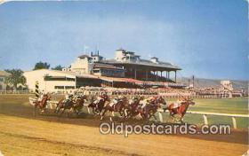 spo021738 - Horse Racing Postcard Post Card