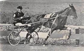 spo021744 - Horse Racing Postcard Post Card