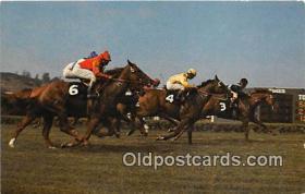 spo021758 - Horse Racing Postcard Post Card