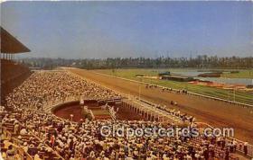 spo021765 - Horse Racing Postcard Post Card