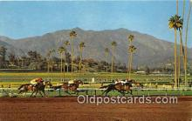 spo021776 - Horse Racing Postcard Post Card